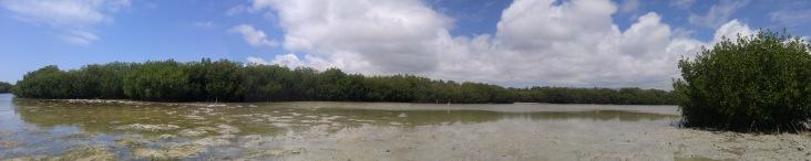 Laguna con Flamencos. Santa Cruz.