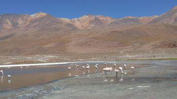 Reserva de Fauna Andina Eduardo Avaroa. Flamencos.