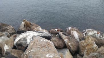 Lobo marino, iguana marina, zayapa y pelícano.