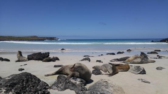Lobos marinos. Puerto Chino.