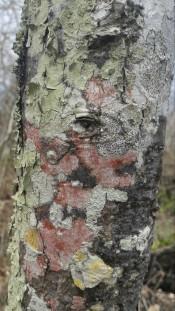 Mirada del árbol.