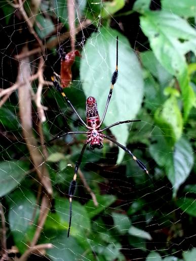 Araña. Parque Nacional Manuel Antonio.
