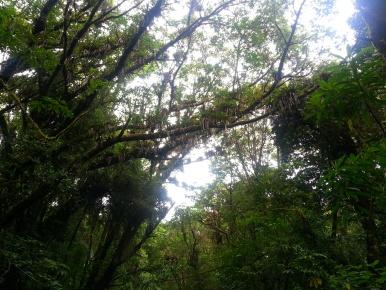 Bromelias. Parque Nacional Braulio Carrillo.
