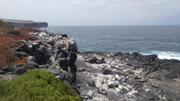 Vistas en Punta Suárez