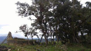 Árboles dentro de Kuélap.