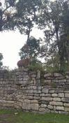 Llama en Kuélap.