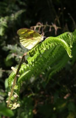 Mariposa en la subida a mirador.