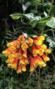 Flora en la subida a mirador.