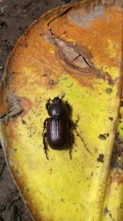 escarabajo en la subida a mirador.