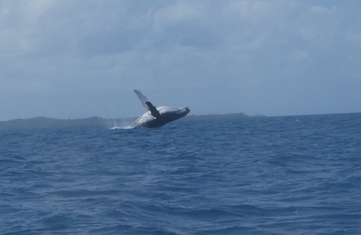 ballena 2
